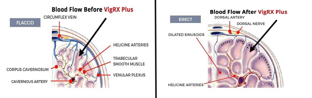 Blood flow vigrx plus