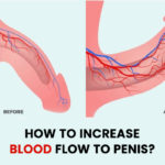 How to Increase Blood Flow to Penis?